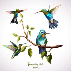 Humming birds. Set of four humming bird. Hand drawn, watercolor. Vector - stock