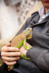 Close up image of man holding his exotic home pet green iguana. Selective focus