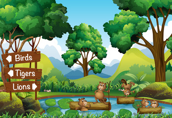 Beavers in the pond and signs for other animals
