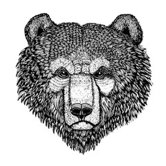 Wild bear Vector image for tattoo, t-shirt, posters Hand drawn illustration