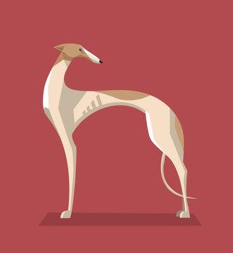 Greyhound dog minimalist image