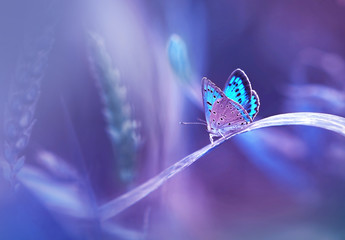 Wall Mural - Beautiful blue butterfly on blade of grass in nature with a soft focus on blurred purple background beautiful bokeh. Magic dreamy artistic image for wallpaper template background design card.