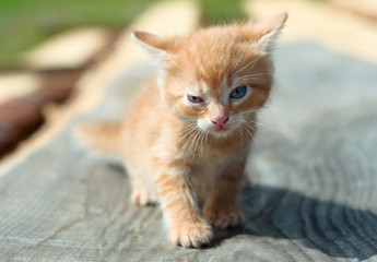ginger small kitten playing in the street