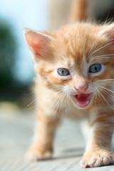 homeless Kitten hungry