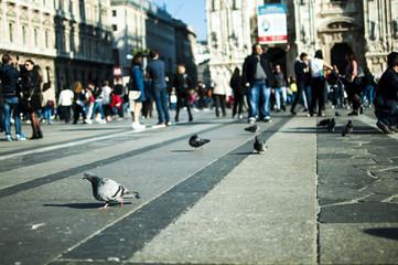 Piccioni in piazza