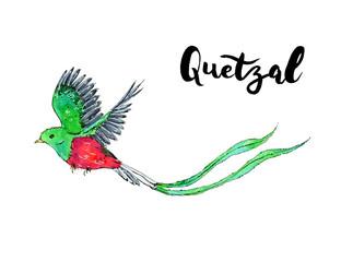 Buscar Fotos Quetzal