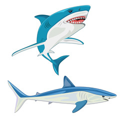 shark. vector illustration