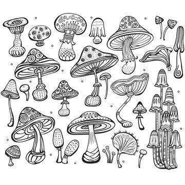 Set of Sketch of mushrooms