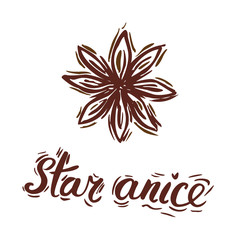 Star anise. Vector botanical illustration with pen and ink. Spice. Isolated vintage image on a white background. Hand-drawn sketch.