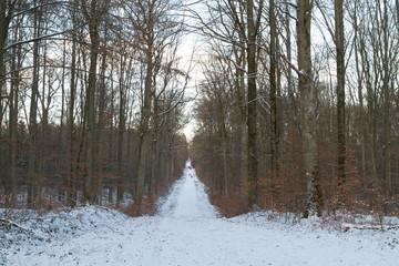Stuttgarter Wald