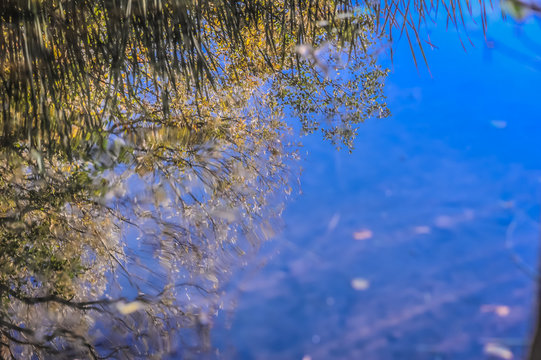 Grass Reflection in a Pond