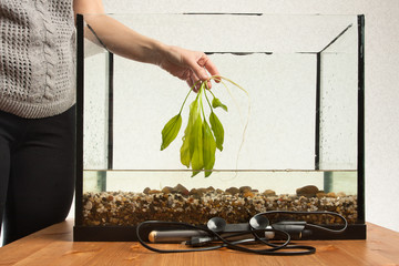 hand of woman holding aquatic plant ready to planting in aquariu