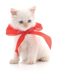 White kitten with a bow.