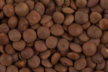 Brown lentils close up