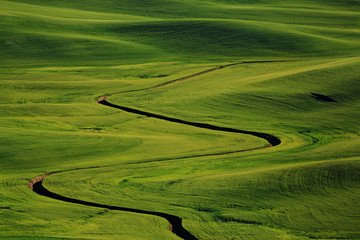 A rural landscape in Palouse.