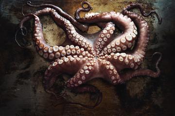 An octopus.