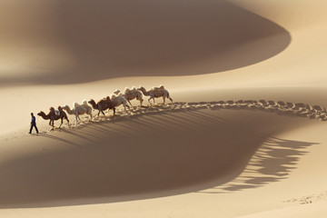 A man leading camels through Badain Jaran desert.