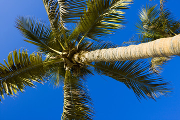 Palm tree against the sky.