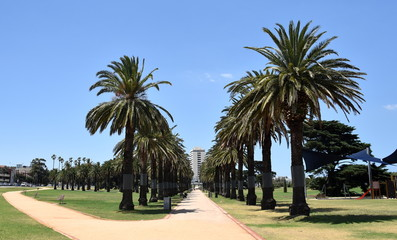 Catani Gardens in St Kilda, Melbourne, Australia. Beautiful footpath lined with palm trees.