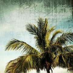 Palm trees.Vintage tone.