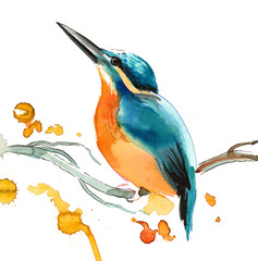 Watercolor sketch of a bird