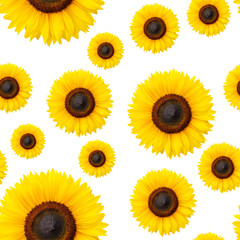 Sunflowers seamless pattern on white background