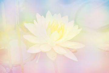 Soft blur Lotus flower in pastel colors sweet background