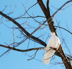 white dove on a tree branch