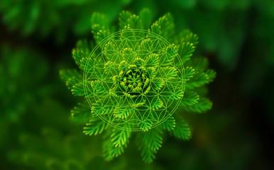 Blume des Lebens - Pflanze
