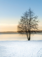 Beautiful sunset late winter afternoon. Single tree against snow and icy water.