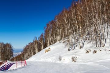 downhill ski through the trees
