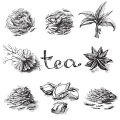 Collection of tea leaves. Green, black, Pekoe tea in graphic style, hand-drawn vector illustration