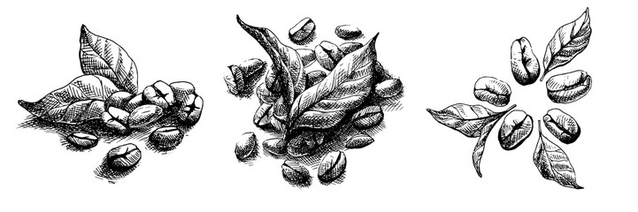 coffee grains and leaves in graphic style
