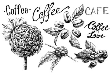 set of coffee beans and leaves and cup in graphic style