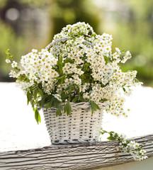 bouquet Spring wild cherry