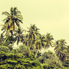 Coconut palm trees and mangrove in tropics