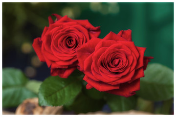 Flower bright background. Bouquet of red roses on a nature green . Top view. Wedding, engagement, for loved ones  all occasions concept