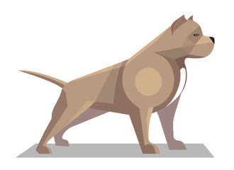 Pitbull minimalist image