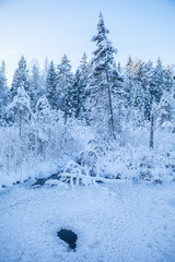 Frosted pine trees along frozen river, sunrise time