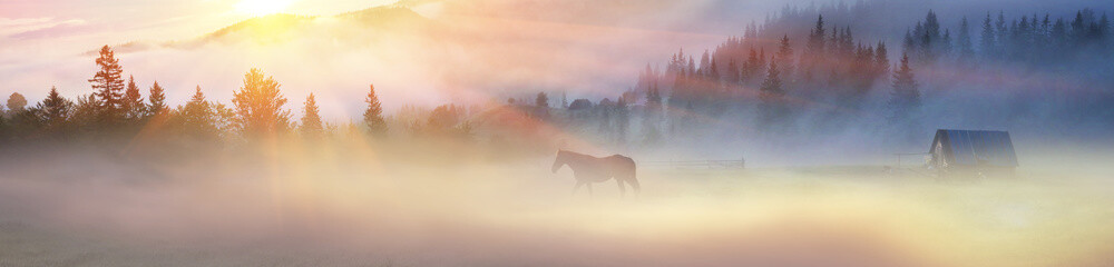 A horse grazes in the fog