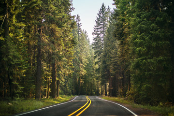 Country road surrounded by trees.