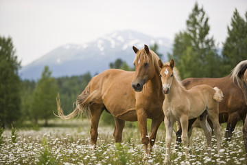 Herd of horses standing on meadow