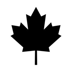 maple leaf canada vector symbol icon design
