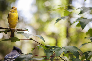 Yellow bird perching on a tree branch.