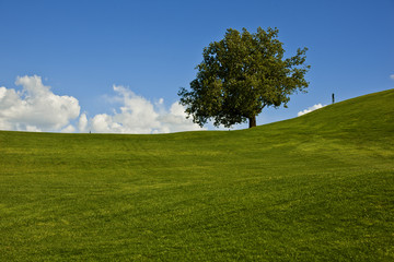 Green grass and a solitary tree on a golf course.