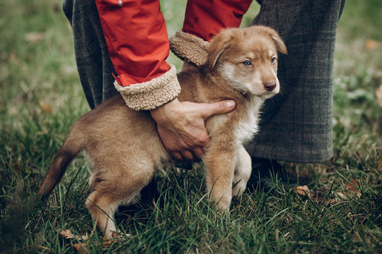 woman hugging cute brown puppy with amazing blue eyes sitting on