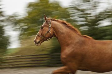 Horse galloping around its enclosure.