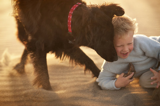 Boy playing with his dog on beach