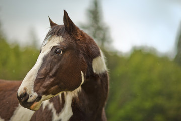 Portrait of a horse in its enclosure.