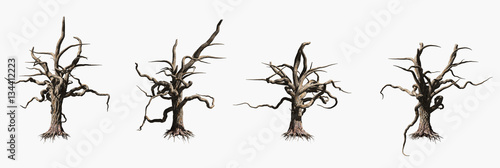 Fototapete  Single old and dead tree isolated on white background